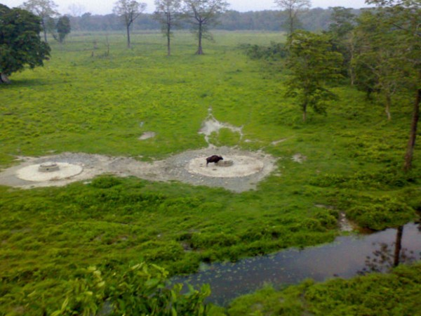 Jalpaiguri photos, The Greenery