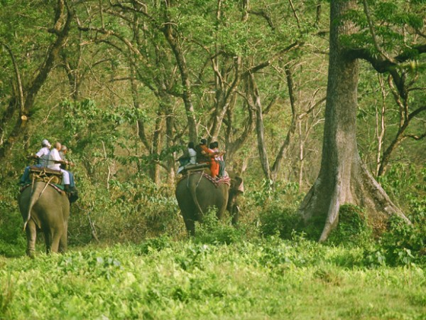 Jalpaiguri photos, The Jungle Safari
