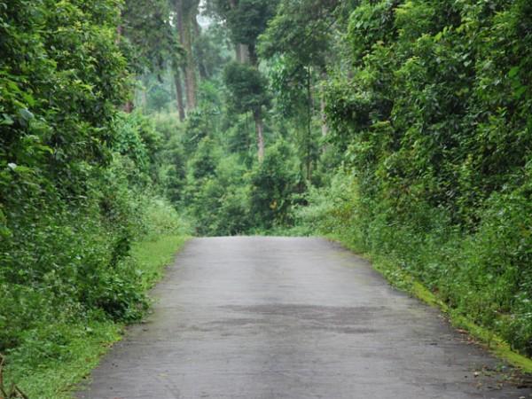 Jalpaiguri photos, A Pathway