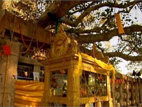 Bodh Gaya photos, Mahabodhi Temple - The bottom portion of the Bodhi Tree
