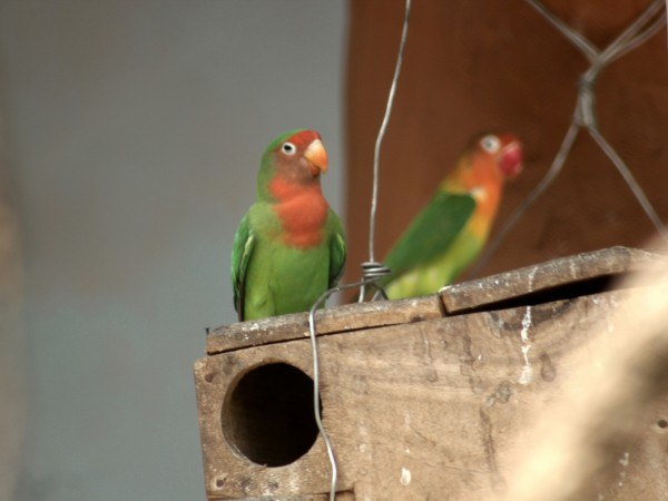 Bhubaneswar photos, Nandankanan Zoo - Parrots