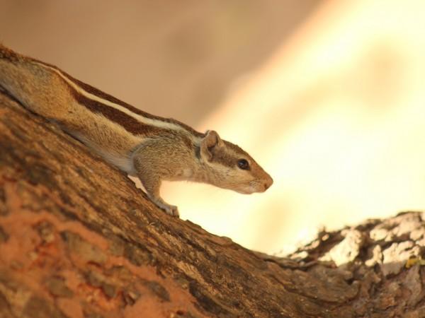 Bhubaneswar photos, Nandankanan Zoo - IMG_4898