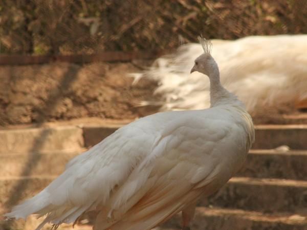 Bhubaneswar photos, Nandankanan Zoo - IMG_4991