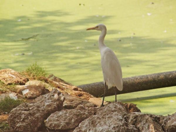 Bhubaneswar photos, Nandankanan Zoo - IMG_4994