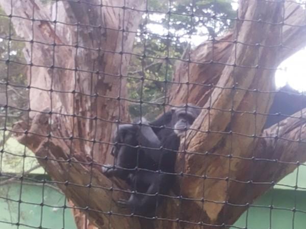 Mysore photos, Mysore Zoo - 20130622_141853
