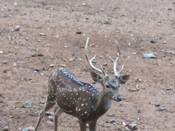Mysore photos, Mysore Zoo - 20130622_144040
