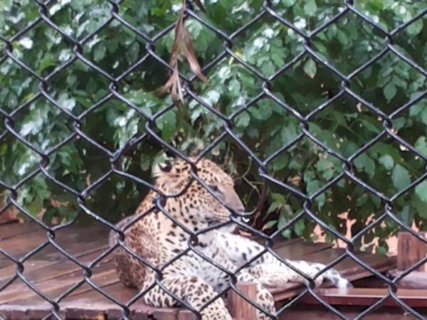 Mysore photos, Mysore Zoo - 20130622_145342