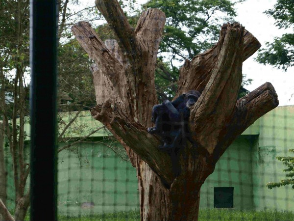 Mysore photos, Mysore Zoo - A Sight