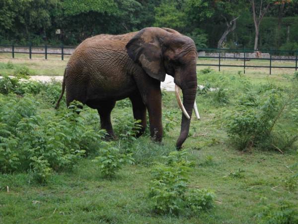 Mysore photos, Mysore Zoo - DSC00664