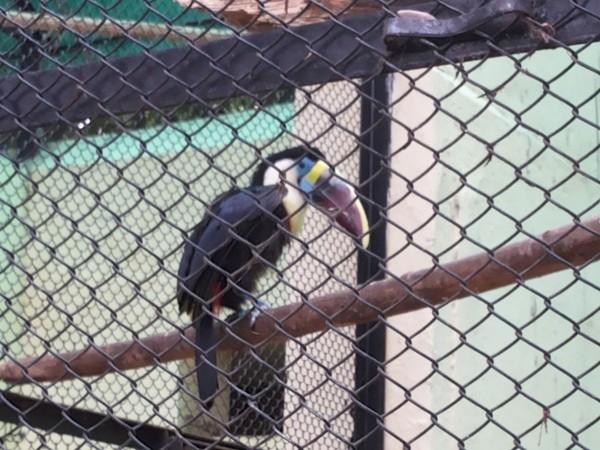 Mysore photos, Mysore Zoo - Perched Up