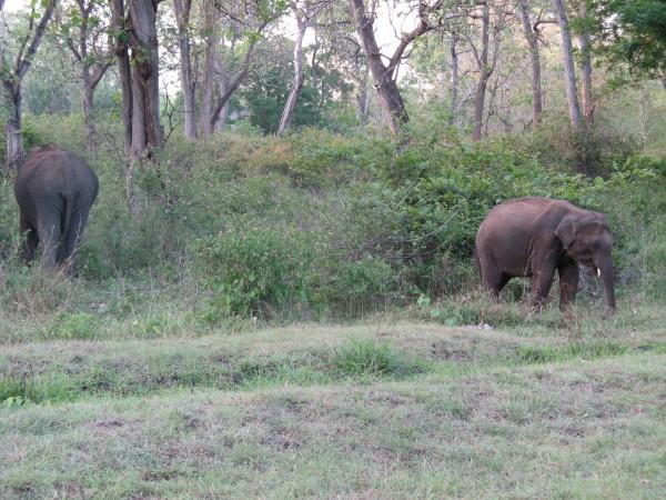 Bandipur photos, Bandipur National Park - Parting Ways?