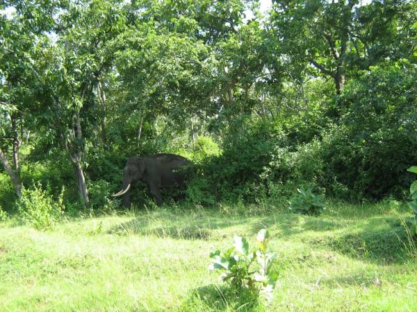 Bandipur photos, Bandipur National Park - Wild Tuskar