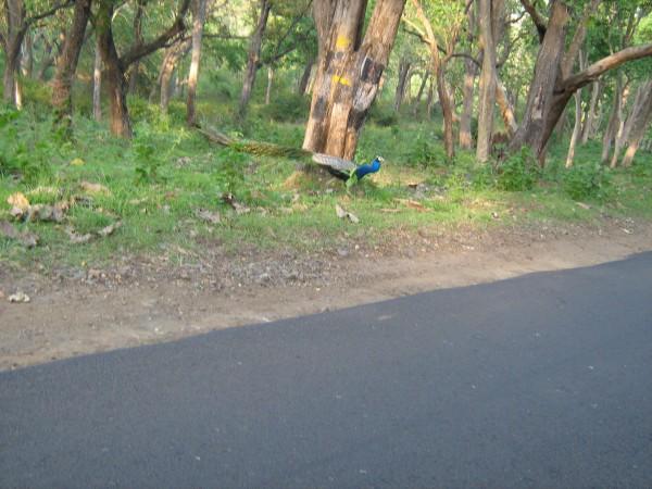 Bandipur photos, Bandipur National Park - Missing Track