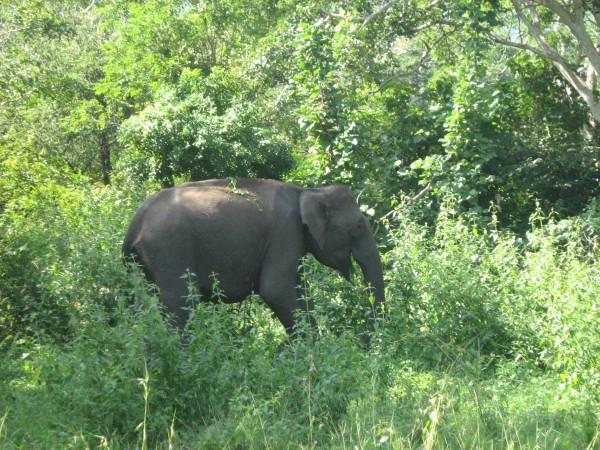 Bandipur photos, Bandipur National Park - Elephant Feed