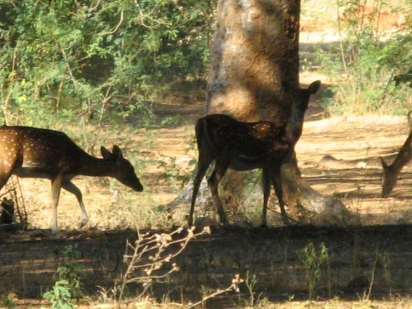 Bheemeshwari photos, Bheemeshwari Fishing Camp - Deer
