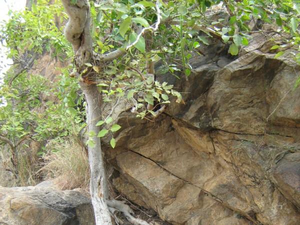 Muthathi photos, Chunchi Waterfalls - Trek