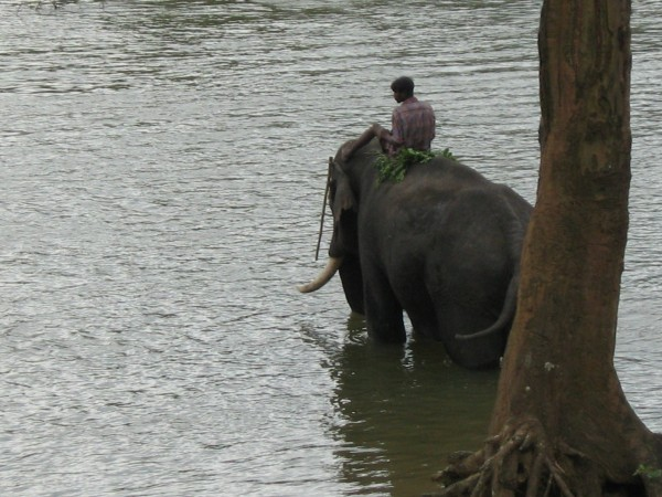 Dubare photos, Elephant Training Camp - No Tears!