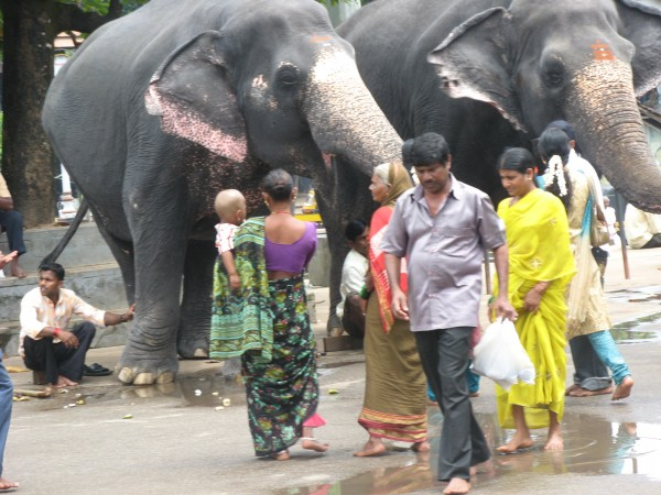 Dharmasthala photos, Dharmasthala Temple - Elephant Stare