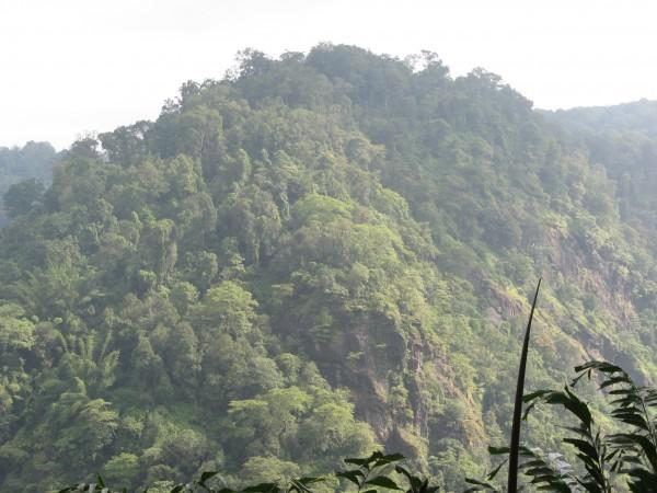 Yellapur photos, Magod Falls - Evergreen
