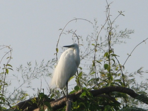 Srirangapatna photos, Ranganathittu Bird Sanctuary - IMG_3197
