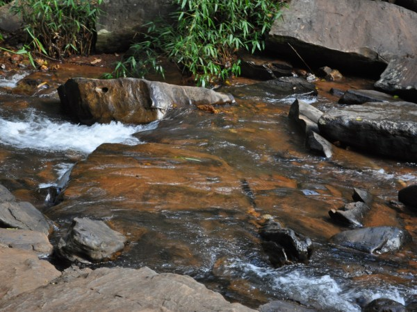 Sringeri photos, Sirimane Falls - DSC_0334