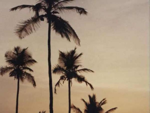 Byndoor photos, Byndoor Beach - Palms during Sunset