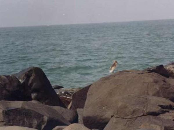 Byndoor photos, Byndoor Beach - The Silent Shores