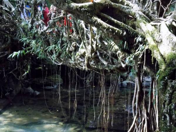 Jaintia Hills photos, Dawki - Root Bridge - near Dawki