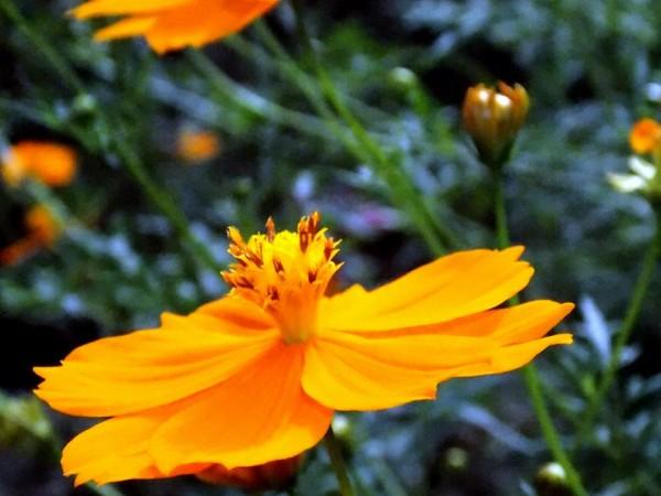 Jaintia Hills photos, Dawki - Cleanest Village-near Dawki(Flowers)