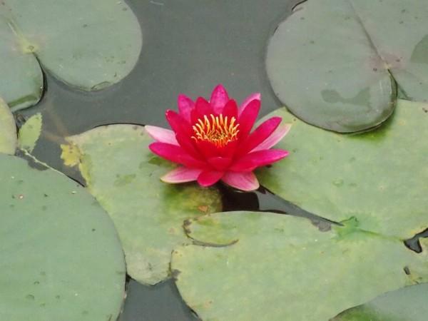Ri Bhoi photos, Orchid lake-Ri-Bhoi