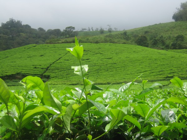 Vagamon photos, IMG_3590