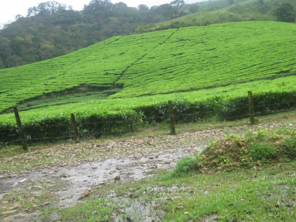 Vagamon photos, IMG_3589