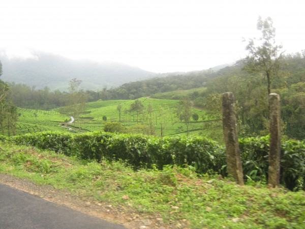 Vagamon photos, IMG_3585