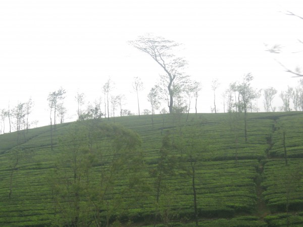 Vagamon photos, IMG_3580