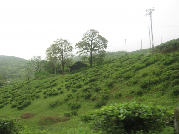 Vagamon photos, IMG_3566