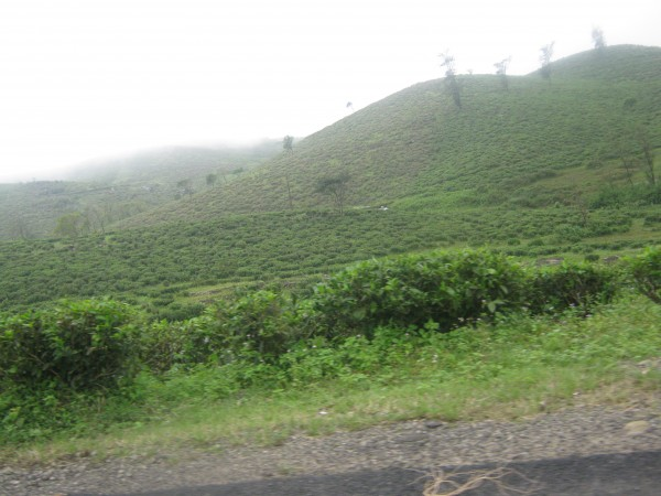 Vagamon photos, IMG_3560