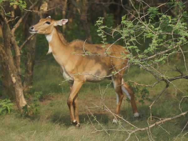 Gir National Park photos, DSC05075