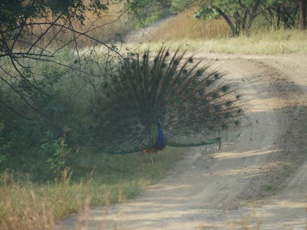 Gir National Park photos, DSC05112