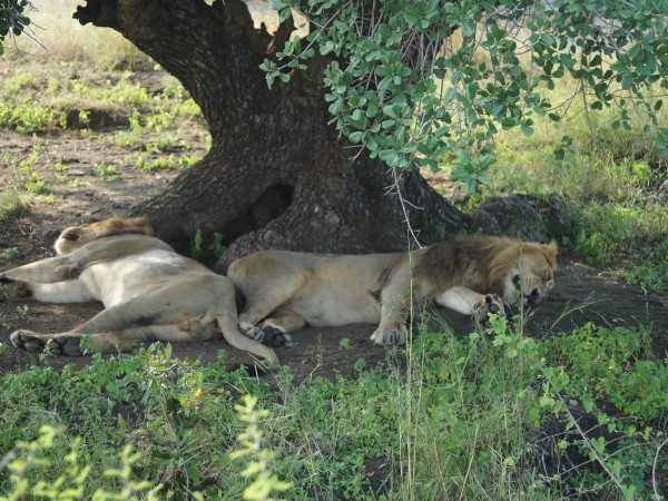 Gir National Park photos, DSC05093