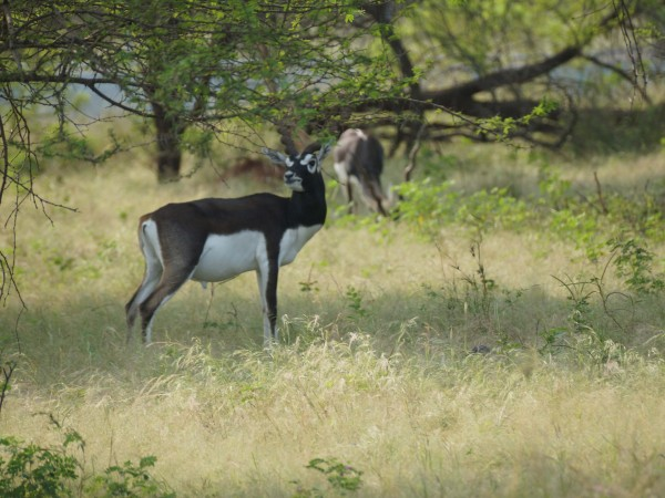 Gir National Park photos, DSC05082