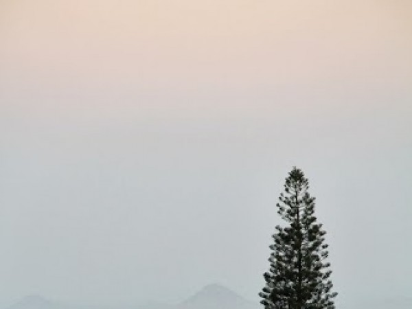 Nandi Hills photos, A tall tree perched amidst the beautiful nature