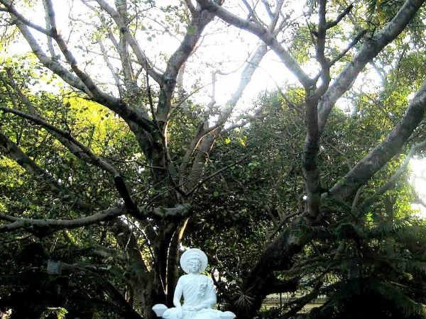 Bangalore photos, Maha Bodhi Society - mahabodhi