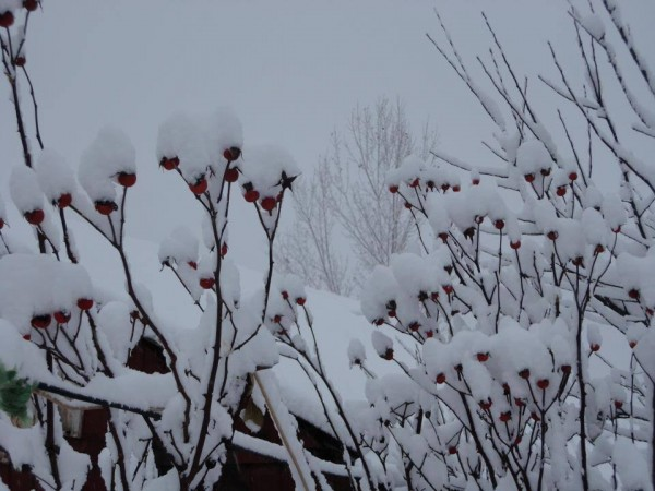 Srinagar photos, Wrapped in snow