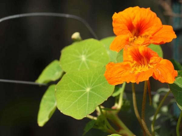 Delhi photos, Lodhi Garden - Lodi Garden -4