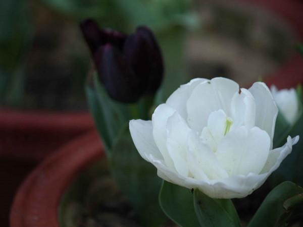 Delhi photos, Lodhi Garden - Lodi Garden-7