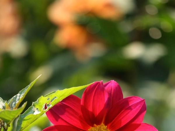 Delhi photos, Lodhi Garden - Lodi Garden-11