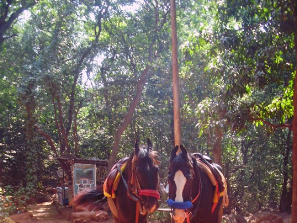 Matheran photos, Horse Riding