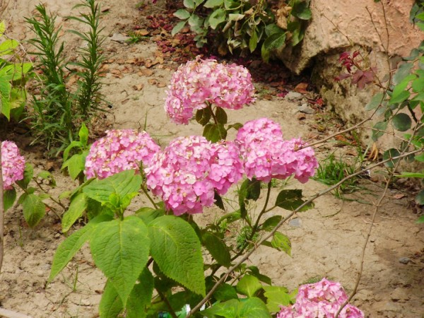 Srinagar photos, Nishat Bagh - Beautiful Flowers