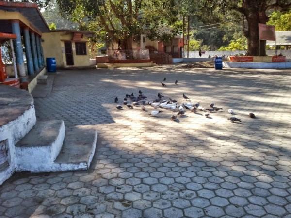 Corbett National Park photos, Garjia Temple - Birds in Temple
