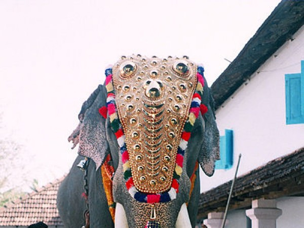 Guruvayur photos, Elephant Camp - Padmanaban1